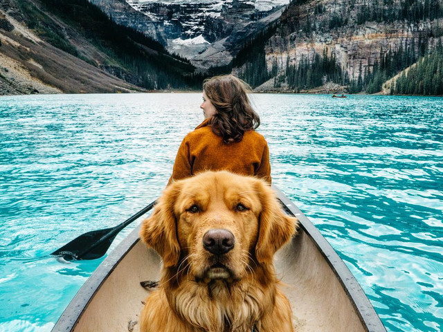 10 Pet-friendly Staycations in India for the Fur-fect Vacay Goals