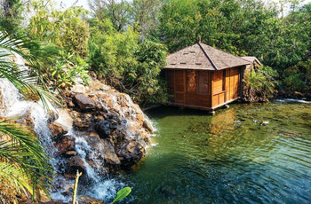 Wake up in Romantic Tree Houses Designed as Honeymoon Resorts in India