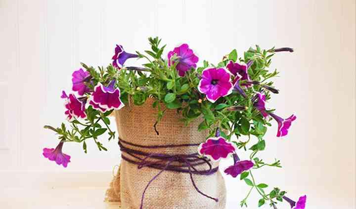 Plant gift
