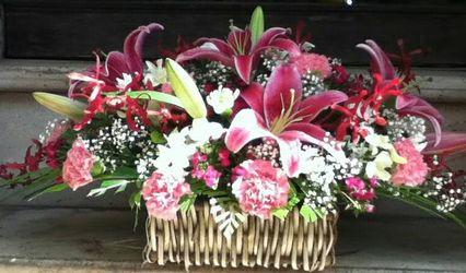 Apollo Florist