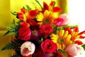 Sharma Flowers