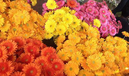 Deccan Flowers, Bangalore