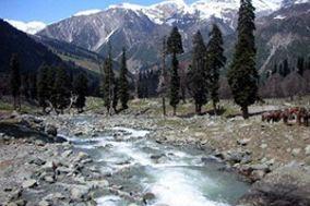 Rashmi Travels