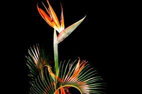 Fresh Flower India