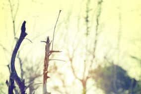 Blubird