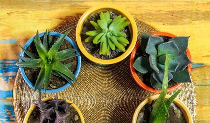 Plants Cart, Noida