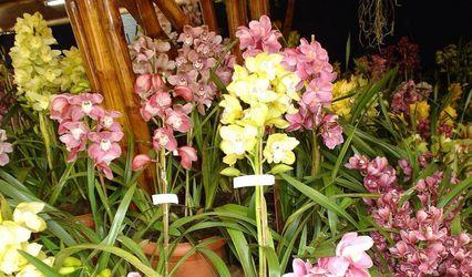 Dewdrops Florals