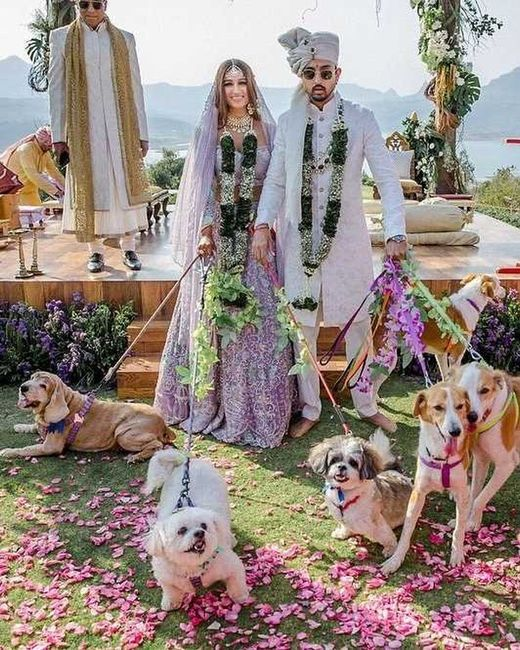 Pawfect Wedding Picture! - 1