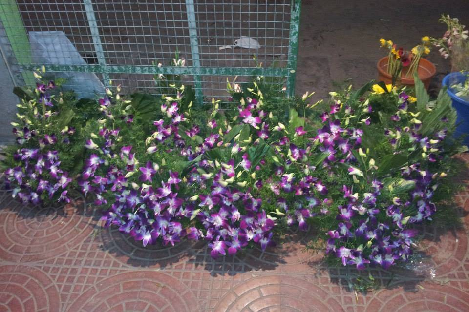 Lillies Florist
